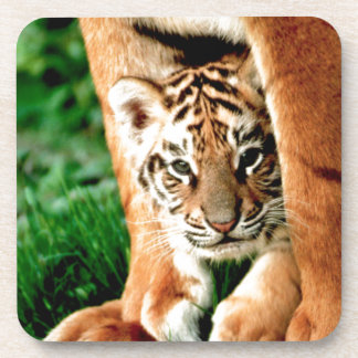 Bengal Tiger Cub Peers Out Coaster