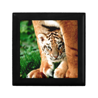 Bengal Tiger Cub Peers Out Gift Box