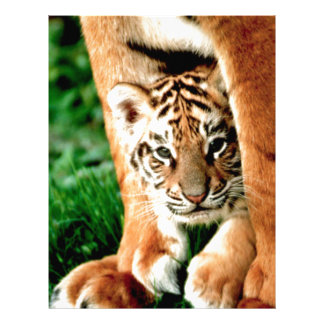 Bengal Tiger Cub Peers Out Letterhead
