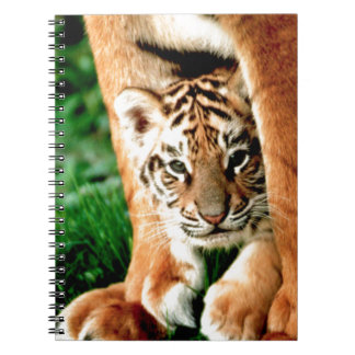 Bengal Tiger Cub Peers Out Notebooks