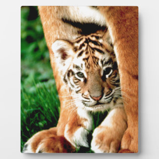 Bengal Tiger Cub Peers Out Plaque