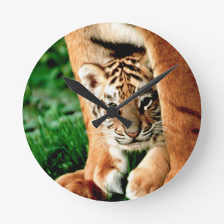 Bengal Tiger Cub Peers Out Round Clock