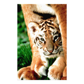 Bengal Tiger Cub Peers Out Stationery