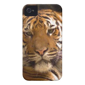 Bengal Tiger iPhone 4 Case-Mate Cases