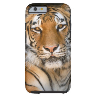 Bengal Tiger iPhone 6 case