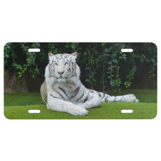 Bengal tiger license plate