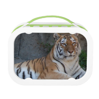 Bengal Tiger Lunchboxes