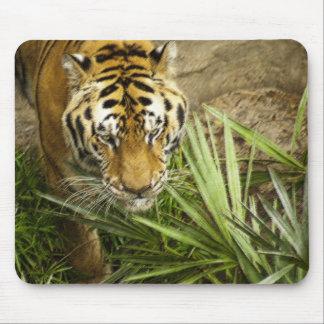Bengal Tiger Mousepad