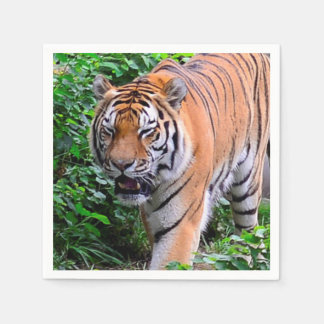 Bengal Tiger on the Prowl (party napkin) Disposable Napkins