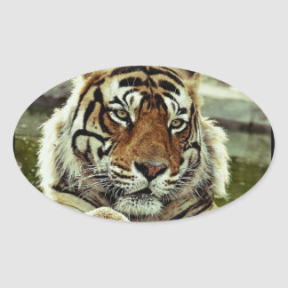 Bengal Tiger Oval Sticker