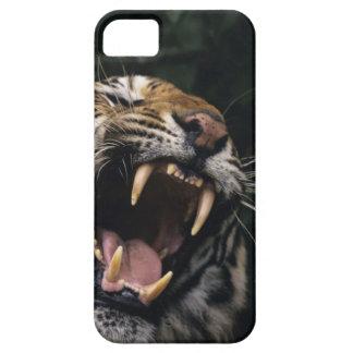Bengal tiger (Panthera tigris tigris) snarling, Case For The iPhone 5