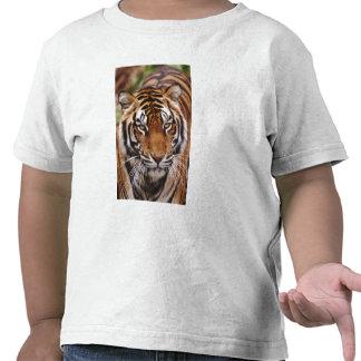 Bengal Tiger, Panthera tigris T Shirt