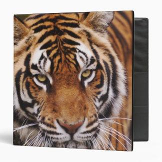 Bengal Tiger, Panthera tigris Vinyl Binder