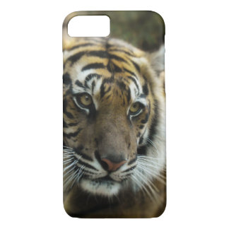 Bengal Tiger Photo Case-Mate iPhone Case