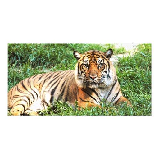 Bengal Tiger Photograph Photo Cards