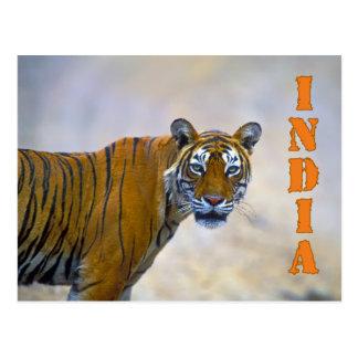 Bengal tiger postcard