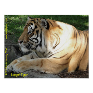 Bengal Tiger Posters