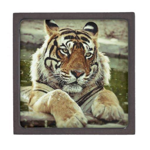 Bengal Tiger Premium Keepsake Boxes