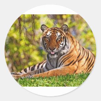 Bengal Tiger Round Sticker