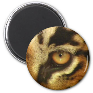 Bengal Tiger s Eye Wildlife Big Cat Lover Photo Magnets