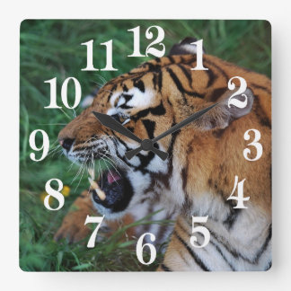 Bengal Tiger showing its fangs Square Wall Clock