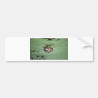 Bengal Tiger Swimming Bumper Sticker
