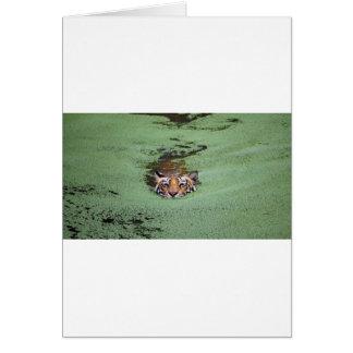 Bengal Tiger Swimming Card