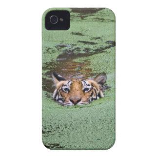 Bengal Tiger Swimming Case-Mate iPhone 4 Case