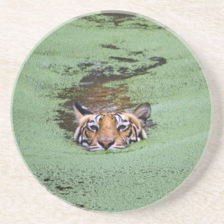 Bengal Tiger Swimming Coaster