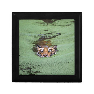 Bengal Tiger Swimming Gift Box