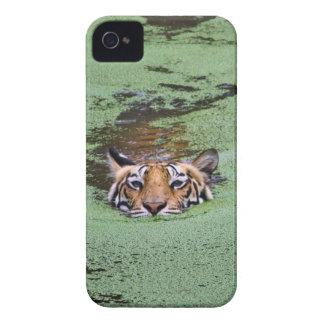 Bengal Tiger Swimming iPhone 4 Cases