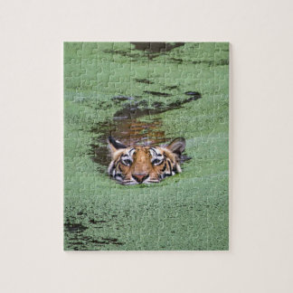 Bengal Tiger Swimming Jigsaw Puzzle