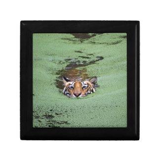 Bengal Tiger Swimming Keepsake Box