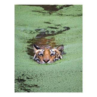 Bengal Tiger Swimming Letterhead