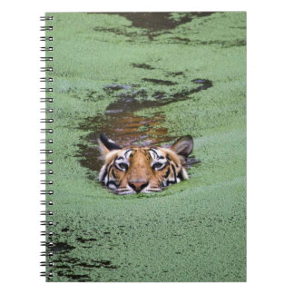 Bengal Tiger Swimming Notebook