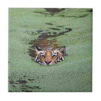 Bengal Tiger Swimming Tile