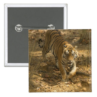 Bengal Tiger walking 2 Inch Square Button