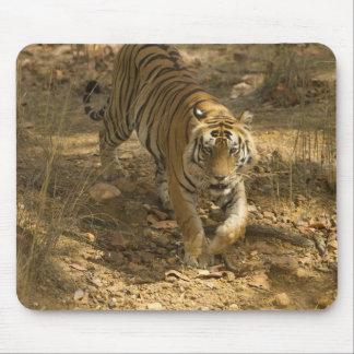 Bengal Tiger walking Mouse Pad