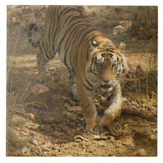 Bengal Tiger walking Tile