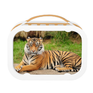 Bengal Tiger Yubo Lunch Box