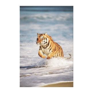 Bengal Tigers (Panthera Tigris) Stretched Canvas Print
