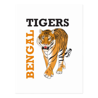BENGAL TIGERS POSTCARD