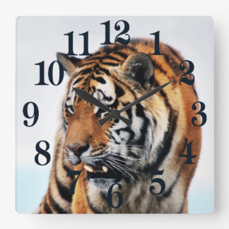 Bengal Tigers Wild Life Square Wall Clock