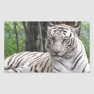Bengal white Tiger Sticker