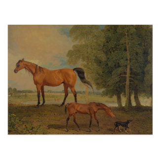 Benjamin Marshall - Broodmare with Foal Post Cards