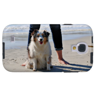 Bennett - Aussie Mini - Rosie - Carmel Beach