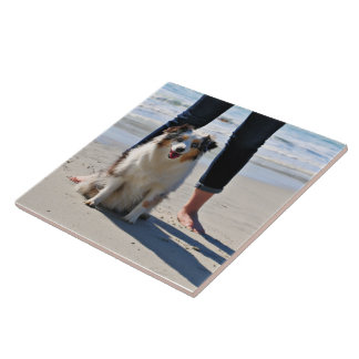 Bennett - Aussie Mini - Rosie - Carmel Beach Ceramic Tile