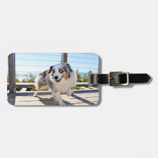 Bennett - Aussie Mini - Rosie - Carmel Beach Luggage Tag
