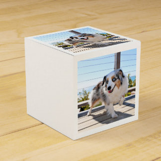 Bennett - Aussie Mini - Rosie - Carmel Beach Party Favor Boxes