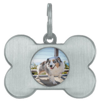 Bennett - Aussie Mini - Rosie - Carmel Beach Pet ID Tags